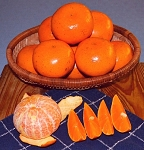 Honey Tangerines Free Shipping Special
