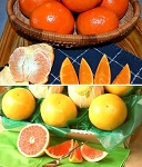 Sunburst Tangerines and Ruby Red Grapefruit