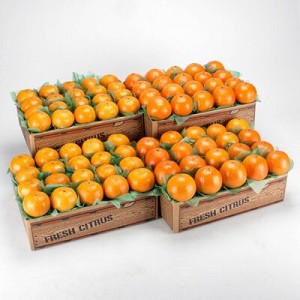 Temples and Honey Tangerines Free Shipping Special